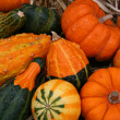 Colorful Pumpkins and Gourds — Stock Photo