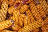 Dried Corn Cobs — Stock Photo