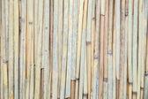 Bamboo backdrop — Stock Photo