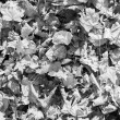 Autumn leaves black and white background — Stock Photo