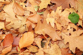 Autumn leaves in park — Stock Photo