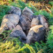 Rocks on fir — Stock Photo