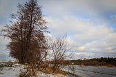Winter forest river with trees — Stock Photo