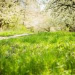 Spring flowering trees — Stock Photo #47054359