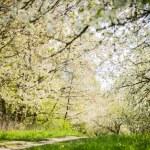 Spring flowering trees — Stock Photo #47054419