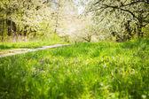 Spring flowering trees — Stock Photo