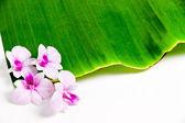 美しい蘭の花 — ストック写真
