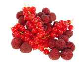 Fresh raspberries and red currants - optional — Stock Photo