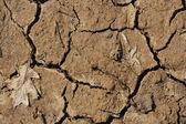 Dry, Cracked Soil — Stock Photo