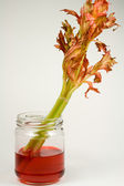 Celery Stalk in Red Food Coloring — Zdjęcie stockowe