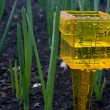 Stock Photo: Rainfall Gauge in Garden