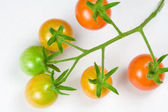 Ripening Cherry Tomatoes — Stock Photo