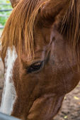 Eye of horse — Stockfoto