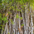 Stock Photo: Bamboo poles.