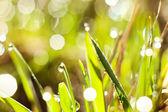роса на траве — Стоковое фото