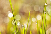 Dew on  grass — Stock Photo