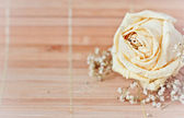 Vintage   picture,   nice soft background,small flowers, — Stock Photo