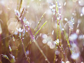 Grass in dew — Stock Photo