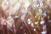 Çimen çiy içinde — Stok fotoğraf