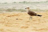 Seagull on Mexican beach — Stock Photo
