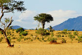 African savannah landscape — Stock Photo