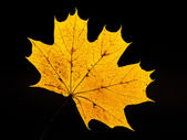 Golden leaf background — Stock Photo