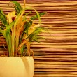 Houseplant on abstract background — Stock Photo