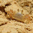 Tiny crab on sandy beach closeup — Stock Photo