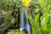 Waterfall in a tropical jungle — Foto de Stock