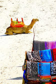 Camel and colorful scarves on african beach — Stock Photo