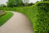 Green bushes at palace garden in Vienna — Stock Photo