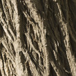 Tree trunk background — Stock Photo #32896371