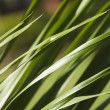 Tall grass, Gurgaon — Stock Photo #32896801