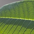 Details of a leaf — Foto Stock