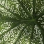 Leaf background — Stock Photo #32899195