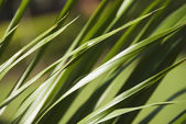 Tall grass, Gurgaon — Stock Photo