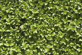 Plants background — Stock Photo