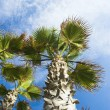 Low angle view of palm trees — Stock Photo #32947797