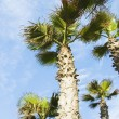 Low angle view of palm trees — Stock Photo #32949979