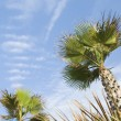 Low angle view of palm trees — Stock Photo