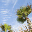 Stock Photo: Low angle view of palm trees