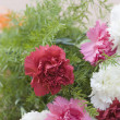 Carnation flowers — Stock Photo #32953983