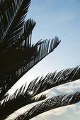 Silhouet van palmbladeren — Stockfoto