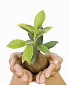Hand holding a sapling — Stock Photo