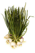 Close-up of a bunch of spring onions — Stock Photo