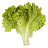 Close-up of lettuce leaves — Stock Photo