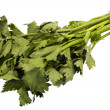 Stock Photo: Close-up of cilantro leaves