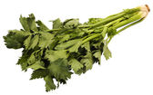 Close-up of cilantro leaves — Stock Photo