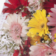 Bouquet of Daisy flowers — Stock Photo