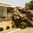Stock Photo: Root of uprooted tree at roadside